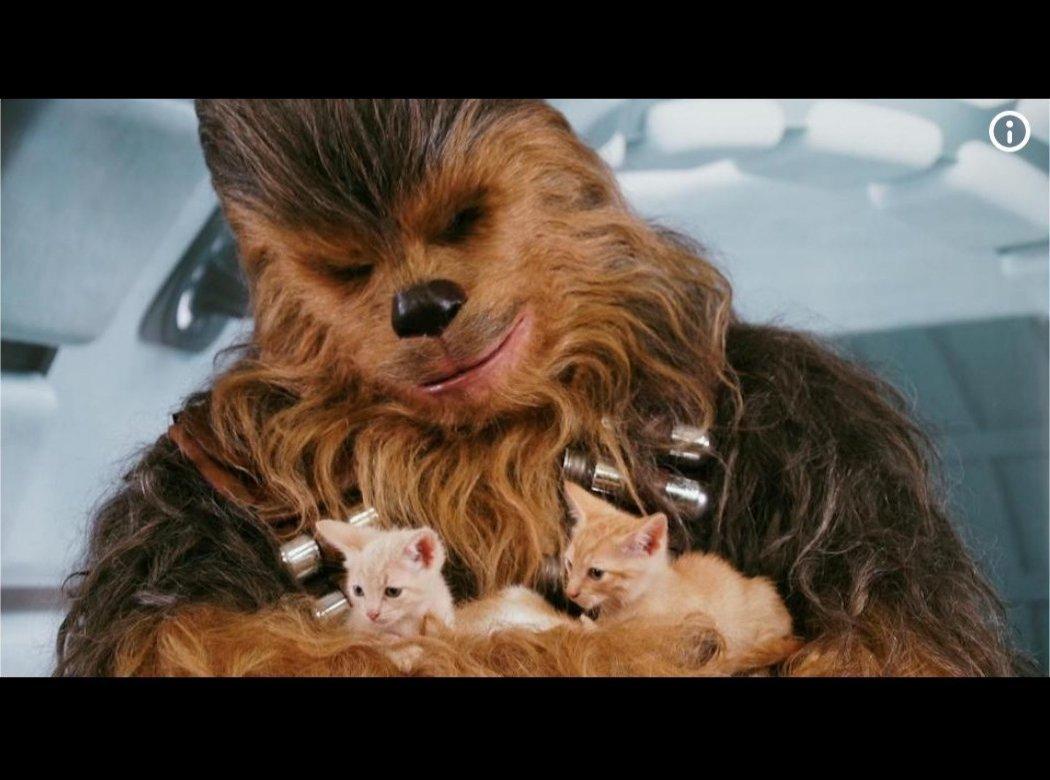 chewie_kitties.jpg