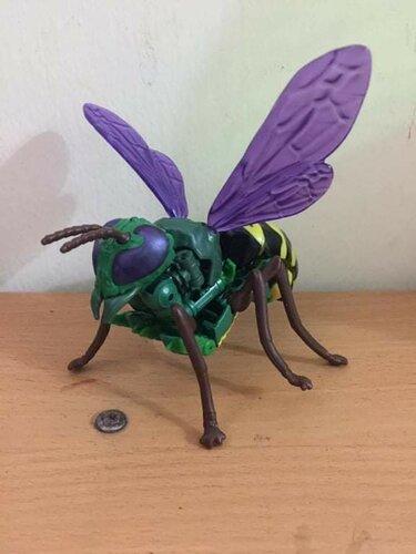 King-Wasp-2.thumb.jpg.aae3ad2e2201f468b2fce56baed30c6f.jpg